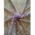 3D Tulle embroidery